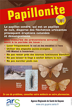 Flyer Papillonite ARS